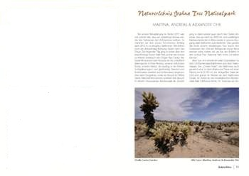 Kaktusbluete 2013_1