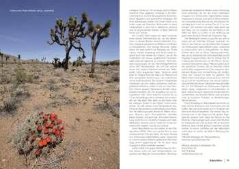 Kaktusbluete 2013_5