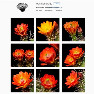 Echinocereus Online auch auf Instagram