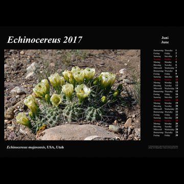 Kalender 2017 – Echinocereus