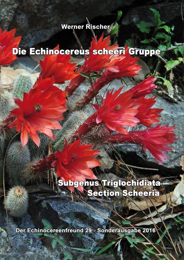 Die Echinocereus scheeri Gruppe