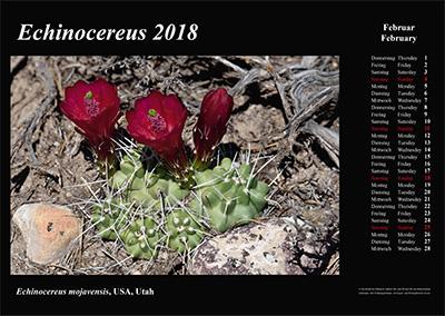 Kalender 2018 - Echinocereus - Utah, Colorado, Oklahoma