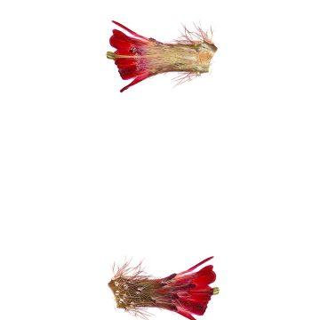 HMAO-003-0610 - Echinocereus spec., USA, Utah, Hurricane-Virgin