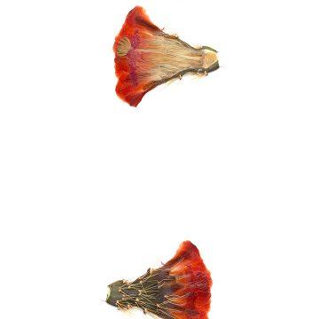 HMAO-003-0686 - Echinocereus coccineus rosei, USA, New Mexico, Südlich Alamogordo