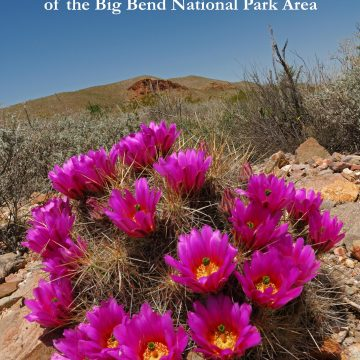 Echinocereus in Habitat: Echinocerei and other Cacti of the Big Bend National Park Area (eBook)