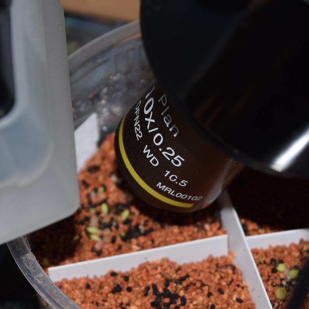 Making of: Makrobilder von frisch gekeimtem Samenkorn