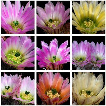 Neue Bilder auf www.pectinatus.de