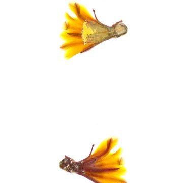 HMAO-003-0848 - Echinocereus maritimus, Mexico, Baja California, Catavina-El Rosario