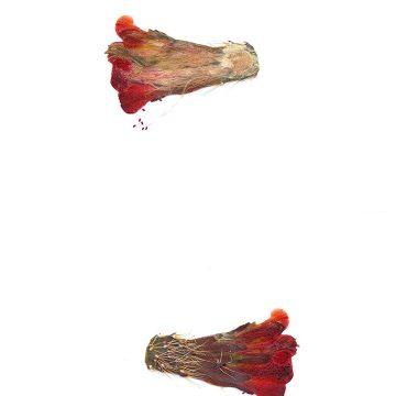 HMAO-003-0903 - Echinocereus mojavensis, USA, Utah, Tooele County