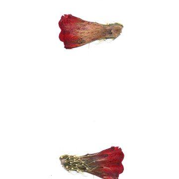 HMAO-003-0904 - Echinocereus mojavensis, USA, Utah, Sevier County