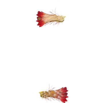 HMAO-003-1121 - Echinocereus polyacanthus, Mexico, Durango, Durango - Mazatlan, Km 55
