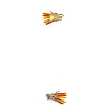 HMAO-003-1231 - Echinocereus neocapillus, USA, Texas