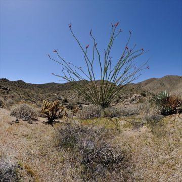 Desert View - Anza-Borrego Desert State Park (Video)
