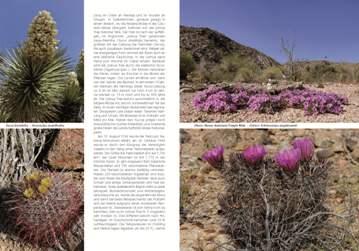 Kaktusbluete 2013_2