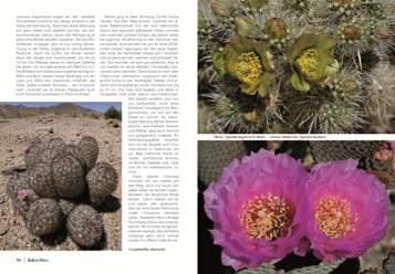 Kaktusbluete 2013_4