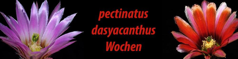 pectidasy_deu
