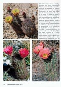 CactusWorld_2_2015_07