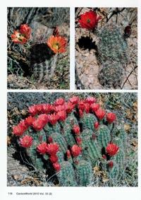 CactusWorld_2_2015_09