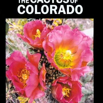The Cactus of Colorado