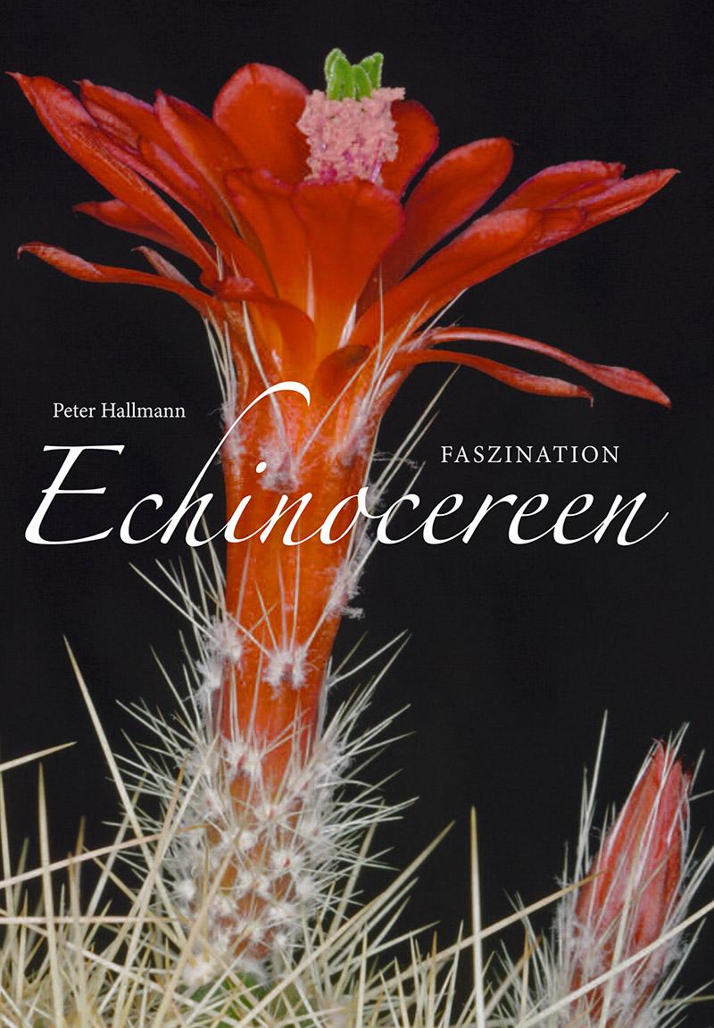 Faszination Echinocereus
