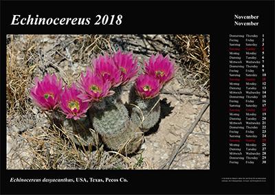 Kalender 2018 - Echinocereus - Echinocereus dasyacanthus, Texas, Pecos Co.