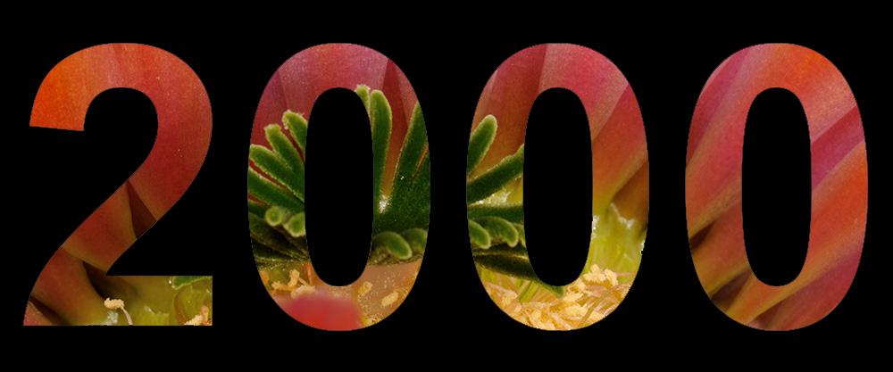 Echinocereus Online hat inzwischen über 2.000 Postings