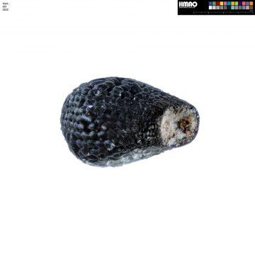 HMAO-001-0225 - Echinocereus coccineus roemeri, USA, Texas, Enchanted Rock