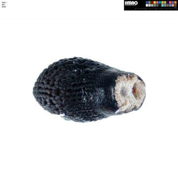 HMAO-001-0232 - Echinocereus pectinatus, Mexico, Detras